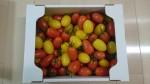 【ふるさと納税】宮城県大崎市 彩りミニトマト詰合せ届きました。