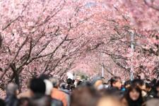 【2016年4月版】コスパ良い株主優待ピックアップ!実践編