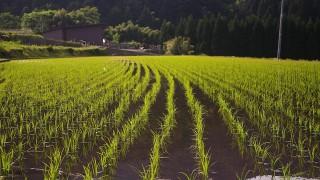 【農家が教える】ふるさと納税で貰ったお米のベストな保存方法。そのまま保存してたら虫が湧いちゃう!