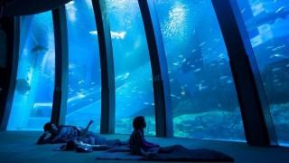 【期間限定】いつもホテルに泊まってるの?たまには水族館に泊まるのもいいよ^^