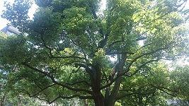 大田区にある入新井公園に行ってきたぞ!夏場にオススメな公園です